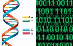 dna-encryption