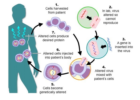 gene-therapy_med-photo